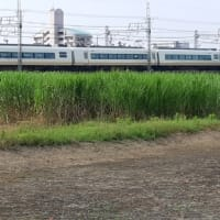 6/26 長雨前の朝観測