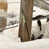 また大雪 その餌台