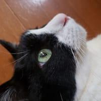 暗闇で撮ったちぃちゃんの写真&1日のルーティーンの巻~