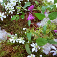 国境の無い花たち展2011