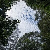 5/22 不動の滝(御浜町神木)
