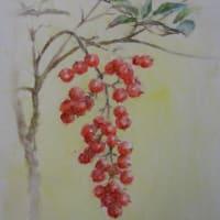 水彩お絵描き思い出めくり№146「南天」