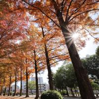 紅葉真っ盛り:岡山県総合グラウンド
