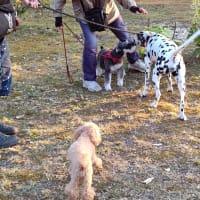 ゴンの友達、多いなあ、犬種も色々、