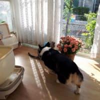20190523の猫たちと時々犬