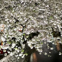 ねむねむ夜桜