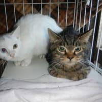 子猫2匹メス保護しました