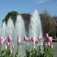 「チューリップと噴水」/上野公園