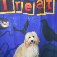 10月31日(土)の登園は定員となりました。  犬のしつけ教室@アロハドギー