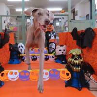 【愛犬の歯磨きレッスン】開催します。  犬のしつけ教室@アロハドギー
