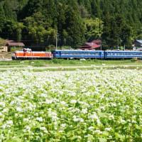 蕎麦畑と鉄道と(陸羽東線)