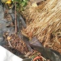 台風15号の被害報告