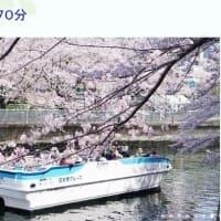 1年前の記事◆大横川さくらクルーズ70分コース:楽しみです。