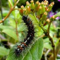 草藪昆虫園、昆虫の幼虫を主に、芋虫、毛虫、青虫、番外にカタツムリ、ナメクジ