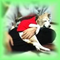 犬を飼うのなら、狂犬病予防注射は必ず受けてね!