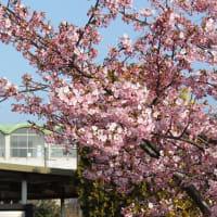 福吉駅の春