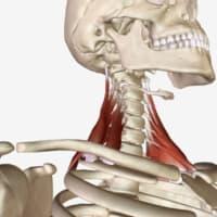 リフターズケア:ケンビキ~肩背部から首筋へと広がる痛み~