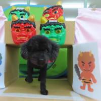 今日は【わんこ整体day】  犬のしつけ教室@アロハドギー