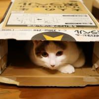 ステイホームな猫と💕