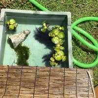 きょうの庭仕事