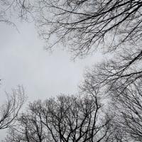河津桜とスズメとシジュウカラ