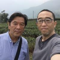 烏龍茶の畑へ行ってきました。
