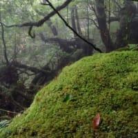 屋久島、白谷雲水峡2