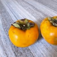 今年初の柿の収穫