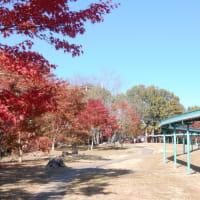 北山公園20191116
