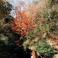 2020.12.6 愛岐トンネル(もみじ狩り)