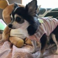 あの有名人の息子が海外逃亡&新潟・山形地震、その時ジッちゃんは被災してた&愛犬の存在は思うより大きい