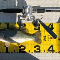 10月16日沖釣りのまとめ。