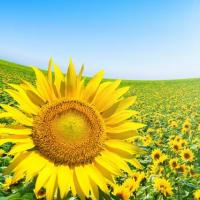 夏の汗の対処法