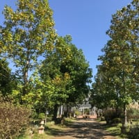 農業公園ベルファームへ行ってきました。