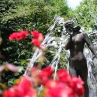 【市川】【X-T4】里見公園の夏薔薇 Roses at Satomi Park, Ichikawa, Japan By X-T4