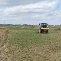 麦の追肥作業中です。