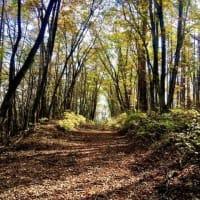 秋の大平湿原
