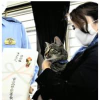 今日以降使えるダジャレ『2368』【感動】■「だれかここにいるニャ」…用水路に落ちた男性救助に一役、猫のココに感謝のキャットフード