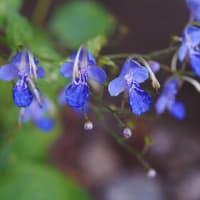 💖紅葉を折る・庭の花💖