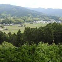 飛鳥の春「新緑とレンゲ草・2021」