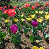 季節の花の彩り
