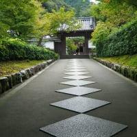 2019そうだ京都、行こう 真如堂の次は、永観堂、南禅寺へ