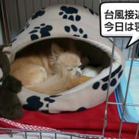 台風19号が・・・