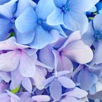 【 写ん歩クラブ 】 7月の4枚  夏空と花々の煌めき