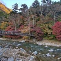 塩原温泉随一の紅葉スポット【紅の吊り橋】当館周辺の紅葉が見頃です