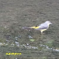 14日の野鳥の名前判りました