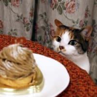 バスクチーズケーキにゃの。