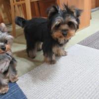 20/03/26 犬の幼稚園BuddyDog