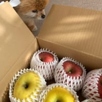 りんごら!