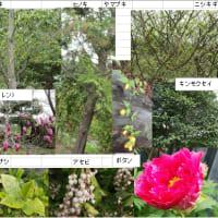 仙石庭園の万葉植物